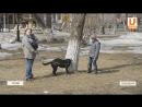 UTV. В Оренбуржье мужчина насадил собаку на вилы