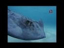 Мир природы Из жизни акул