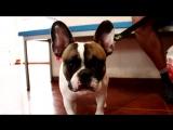 Ветеринарная клиника AVVA - любовь и забота 24 часа в сутки!