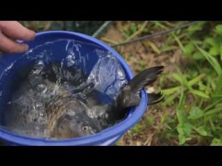 активатор клёва fishhungry купить в смоленске