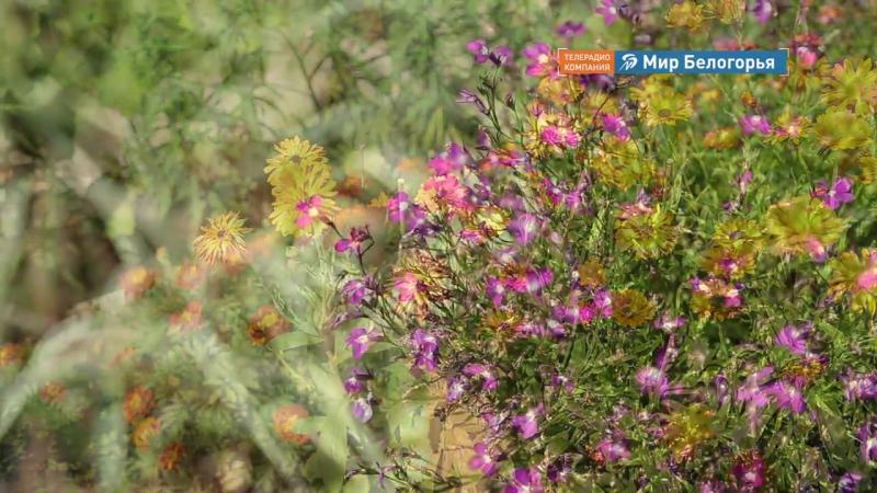Как вырастить лекарственные травы