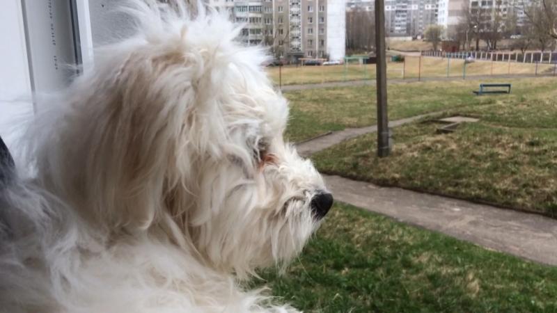 Тоби осматривает свои владения.