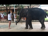 Шоу слонов. (Тайланд, 23.11.2017)