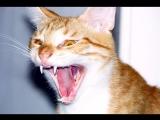 Страшнее зверя нет...чем кот!