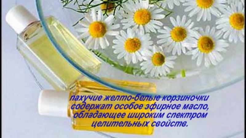 лекарственные травы-show0