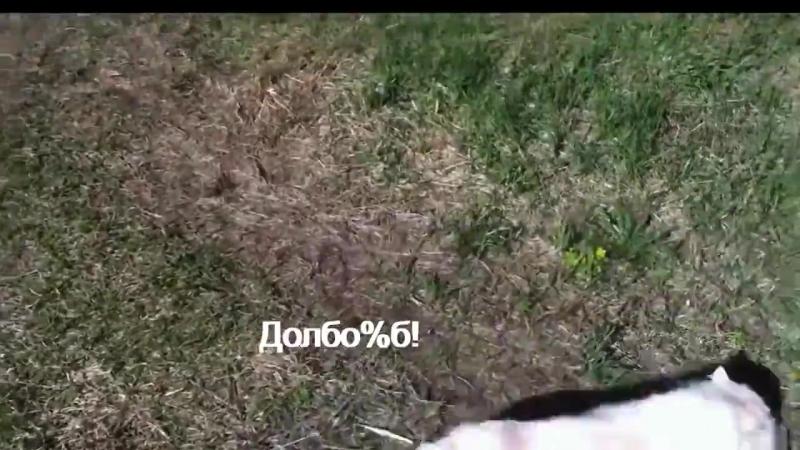 [v-s.mobi]Кот ругается матом.mp4