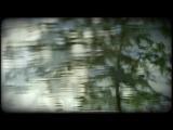 Anton Kubikov Kurt's Forest