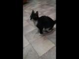 Наша кошка Фрида выполняет команду