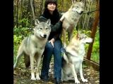 Фотосессия с волками Шакира, Драго и влчаком Саркусом в зоостудии
