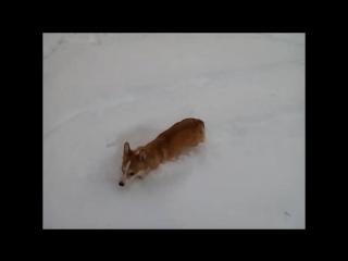 Трикси в снегу.mp4