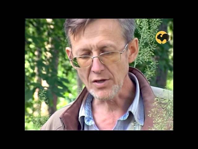 Сад и огород-108 Лаконос