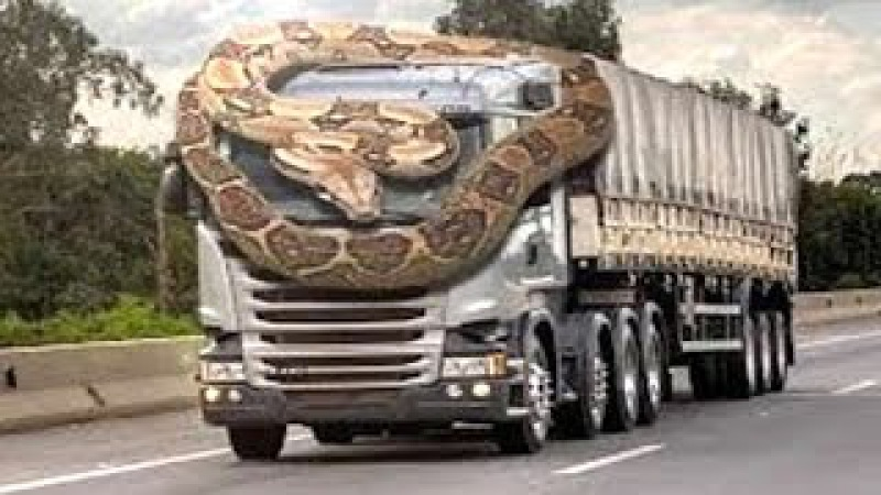 Giant Python attack Car - Humans on Road