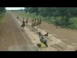 Как привлечь внимание страусов  и самый главный вопрос зачем? цель так сказать) может кто предположить)))