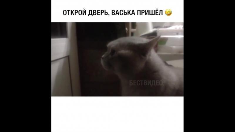 васька пришёл