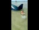Чёрное море Акула