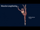 SLs How To Developpe A La Seconde Ballet Muscle Anatomy EasyFlexibility