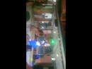 Танец живота по- турецки