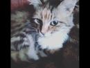Моя любимая кошечка Киса