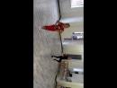 Полька. Бально-спортивные танцы.