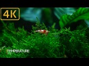 Dreamy Shrimp Tank