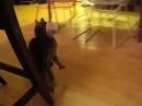 Кот и стаканчик