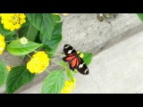 Jardin Botanique de Montréal: Papillons en liberté 2017