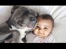 Cute Pitbull and Baby Videos Compilation [NEW]