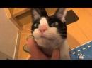Gatito recibe a su dueño después de no verlo por 3 días... ¡Como si fuera perro!