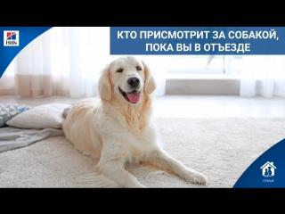 Кто присмотрит за собакой, пока вы в отъезде