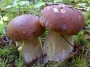 Собираем грибы в прямом эфире