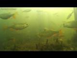 Что происходит под водой когда не клюёт