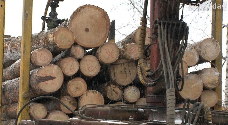 Активисты ОНФ добились прекращения масштабных рубок леса около села Батурино Томского района