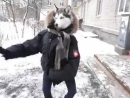 2 секунды _➊Угарное видео™ .240