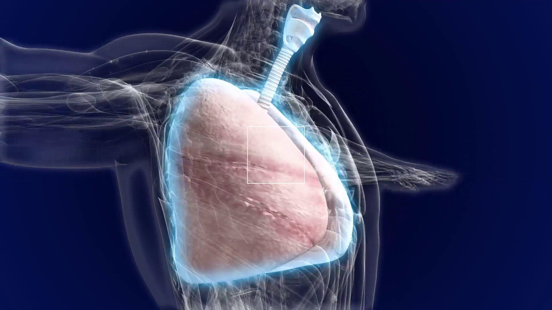 Что такое дыхательная система?