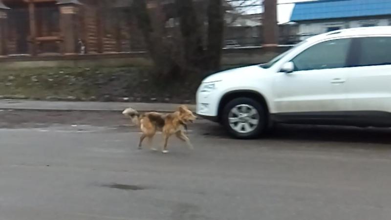 VID_20171202_153741 - Собаки в городе.