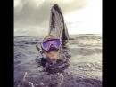 Swimming with humpbacks in Tonga