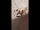 на заметку - устройство для слепых собак!
