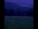 Поле светлячков после грозы в Пенсильвании beauty mood inspiration