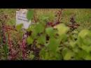 Открытие первого в Твери и области дендрологического питомника.