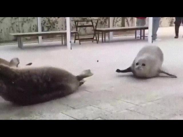 Disco Seals · coub, коуб