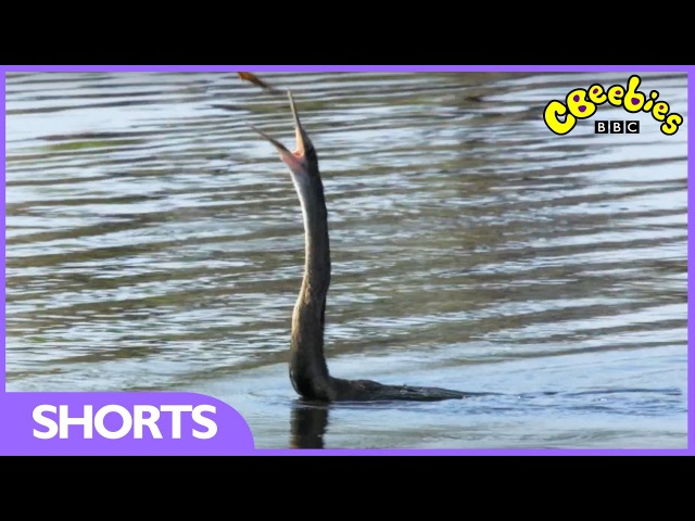 CBeebies | Andy's Baby Animals | Fishing Practice