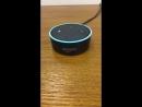 Amazon Echo - Hatsune Miku