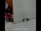 @visecvideo в Instagram «Нежданчик для котейки 😾 Ставь лайк