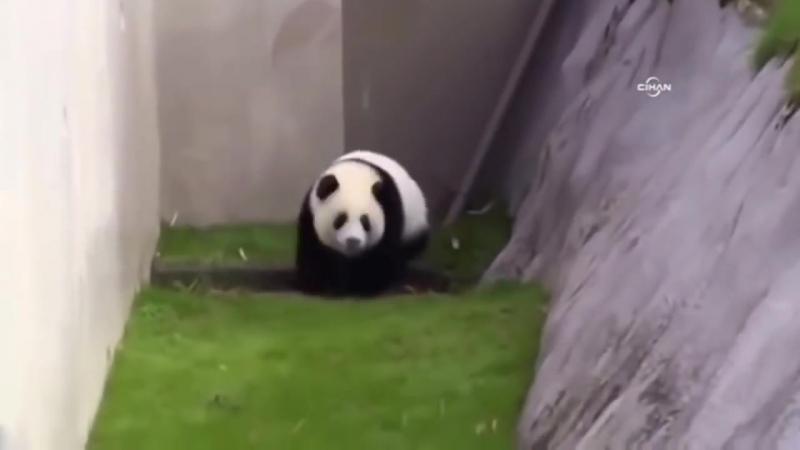 Ben Yoruldum Hayat Panda Versiyon.mp4