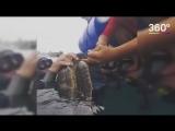 Спасение морской черепашки