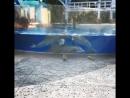 Дельфины увидели белочек