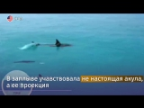 Фелпс против белой акулы