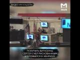 У московского повара украли криптовалюту эфириум (биткоин новости)