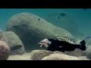 """#شاهد 👁 كيف تقوم هذه #السمكة الأم 🐟 بحماية صغارها من الإفتراس  وذلك بوضعهم #داخل_فمها عند اقتراب الخطر❗️  """"لله في خلقه شؤون"""""""
