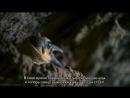 BBC Африка 3 Конго Познавательный природа животные 2013